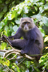 青い猿が木に座っている