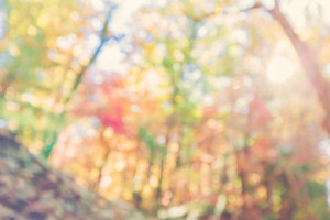 Blurred bright abstract autumn forest backround