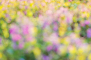 Blurred summer meadow with with various colorful flowers. Sunny nature background. Springtime