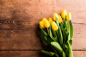 Bouquet of yellow tulips. Studio shot on wooden background. Copy space, flat lay.