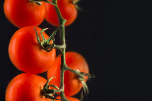 Branch of fresh red cherry tomatoes isolated on black