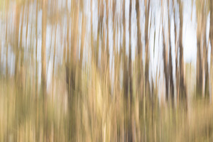 Bright blurred abstract forest trees background texture