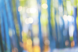 Bright blurred bamboo forest abstract background at sunset
