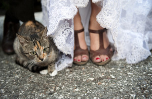 Cat sitting next to bride in wedding dress