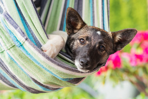 Close up of a happy dog lying in striped hammock, sunny summer