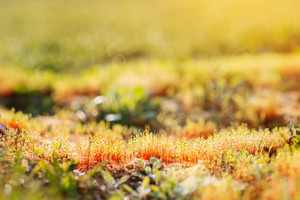 Close up of colorful sunny spring meadow, grass growing, blurred