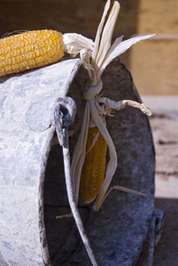 Close-up of dried yellow corn hanging on bucket