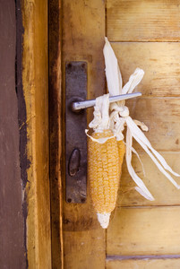 Close-up of dried yellow corn hanging on door handle