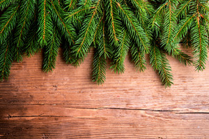 Close up of fir tree branches on wooden background.