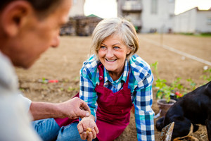 Close up of senior couple planting onions in their garden into soil , spring nature