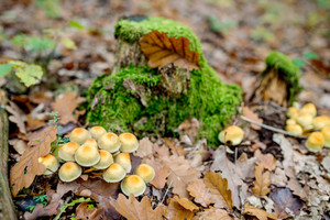 Close up of various mushrooms growing in autumn forest next to green moss on the ground