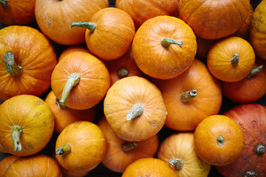 Close-up of various pumpkins
