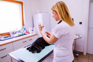 Close up of veterinarian preparing injection for a dog. Young woman working at Veterinary clinic.