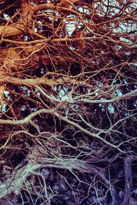 Close up on twisted leafless branches. Vintage filtered, organic backdrop, texture.