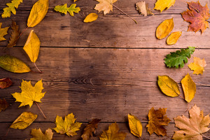 Colorful autumn leaves. Studio shot on wooden background. Copy space, frame composition.