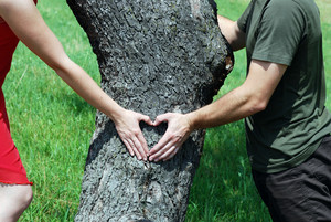 Couple is putting their hands on tree in a shape of heart.