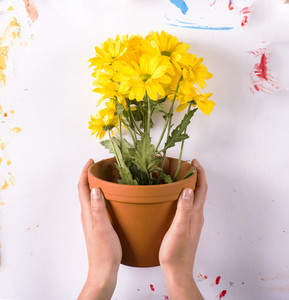 Creative concept with flowers