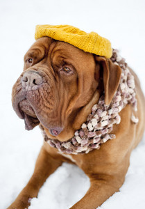 Cute dog is chilling out in funny hat
