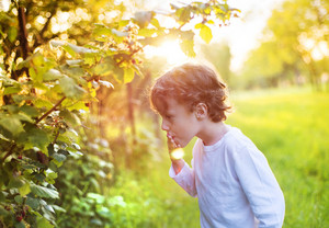 Cute little boy picking berries outside in a sunny garden
