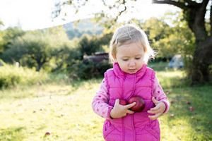 Cute little girl in pink sweatshirt and vest outside in nature on a sunny day, holding apples