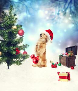 Dachshund dog decorating Christmas tree with treasure box on the snow
