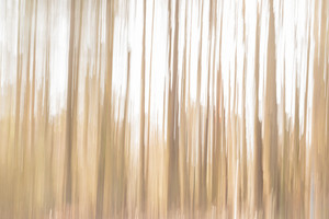 Defocused bright abstract morning forest sunlight background