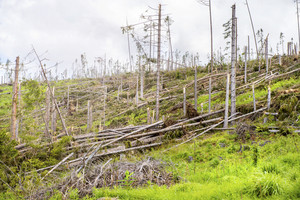 Destroyed forest as an effect of strong storm in High Tatras, Slovakia