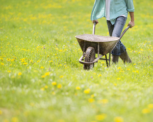 Detail of young male farmer pushing wheelbarrow in the field