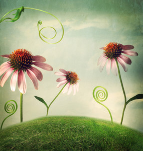 Echinacea flowers in a fantasy hilltop landscape