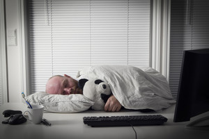 Exhausted office worker sleeps with his koala bear teddy.