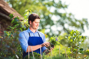 Gardener holding a plant in his garden, green sunny nature
