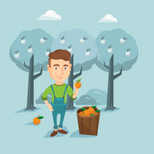 Gardener holding an orange on the background of orange trees. Young caucasian gardener collecting oranges. Gardener standing near basket with oranges. Vector flat design illustration. Square layout.