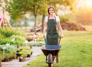 Gardener with wheelbarrow in green apron working in back yard, sunny summer nature, sunset