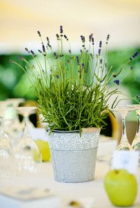 Green and natural table decoration