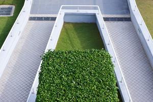 Green grass on square concrete block in the park