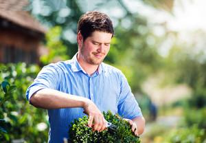Handsome gardener pruning little boxwood bush against green sunny nature