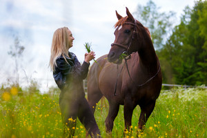 Happy young woman feeding her arabian horse with snacks in the field