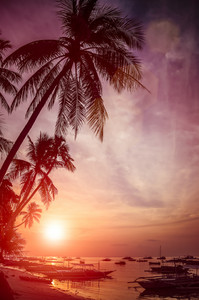 High palm trees on sunset on the beach with silhouette of banca boats at Panglao Island, Bohol, Philippines
