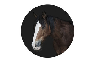 Horse in circle frame