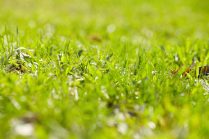 Image of fresh green grass outdoors