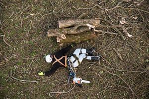 Injured lumberjack with chainsaw and harness lying on the ground after falling from the tree.