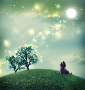 Little dachshund dog in a magical landscape in the night