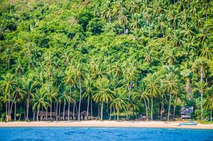 Local huts under palm trees on Cadlao Island, El Nido, Palawan, Philippines