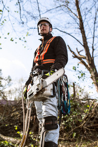 Lumberjack with chainsaw and harness prepared for pruning a tree. A tree surgeon, arborist going to climb a tree in order to reduce and cut his branches.