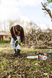 Lumberjack with chainsaw preparing for pruning a tree. A tree surgeon, arborist going to climb a tree, putting on a harness in order to reduce and cut his branches.