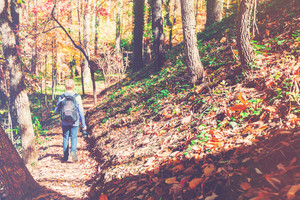 Man walking a forest trail on bright autumn day