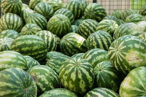 Many ripe watermelons on the market