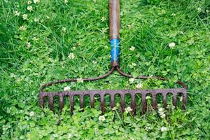 Metal Garden Rake on Lawn