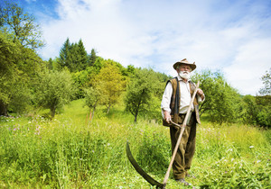 Old farmer with beard using scythe to mow the grass traditionally