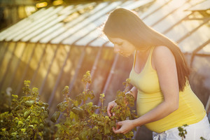 Outdoor portrait of beuatiful pregnant woman picking blackcurrants in the garden